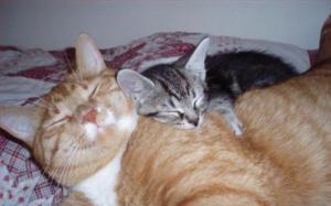 Cuddlycats